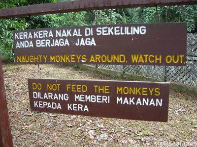 naughty monkeys