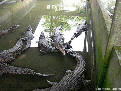 croc aggressive
