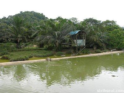 croc feeding pond