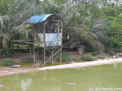 croc feeding tower