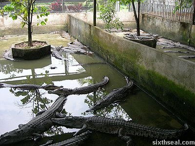 crocodile concrete pits