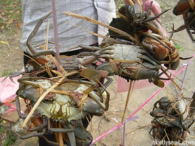 roadside crabs serious