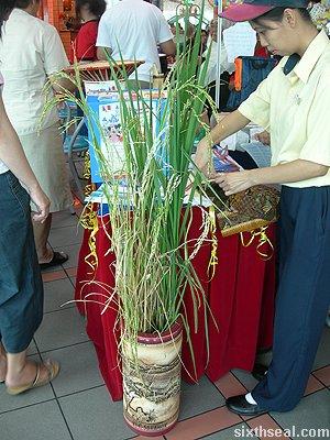 kfc colonel rice stalks