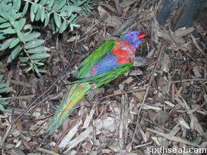 parrotd.jpg