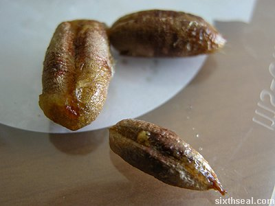 egypt kurma seeds