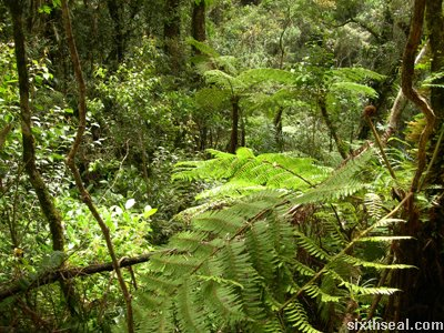 fern canopy