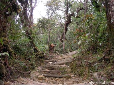 km1 trail