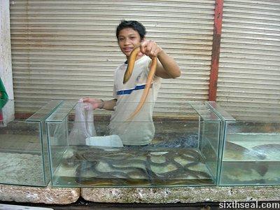 sabah eel you