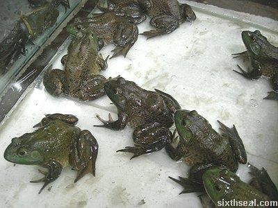 sabah frog
