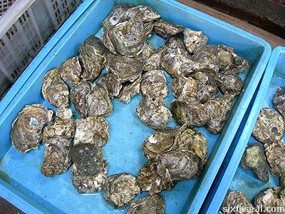 sabah mussels