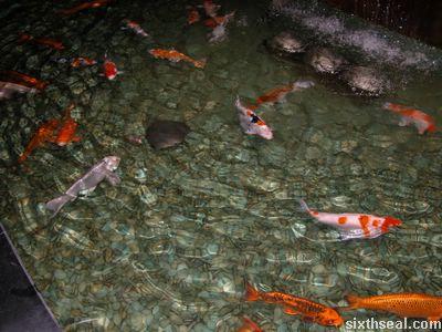 komplexfish.JPG