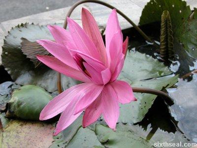 adem2 lilies