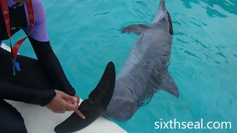 Dolphin Anatomy