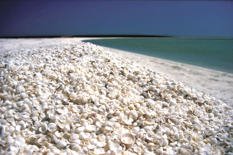 shell-beach