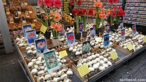 tulip bulbs amsterdam