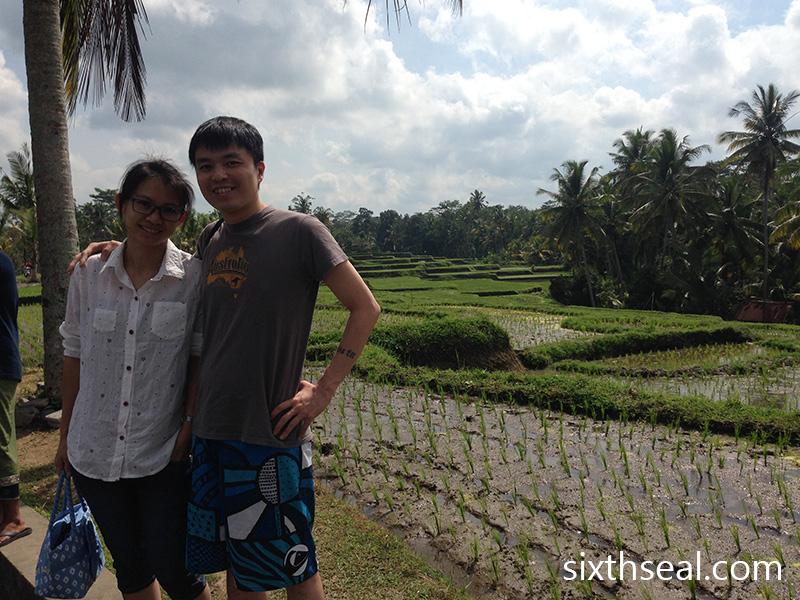 Bali Padi Fields