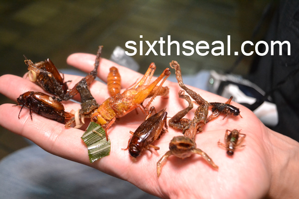 Eating Fried Insects in Bangkok: Beetles, grasshoppers, frogs, crickets, worms, red ants!