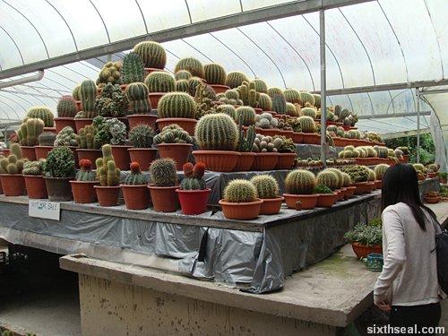 cactus nfs
