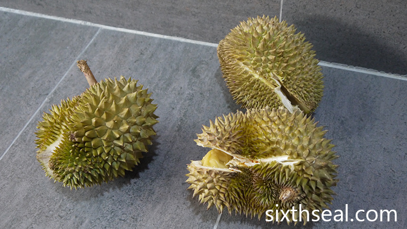 Backyard Durians