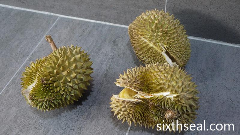 Backyard Durians
