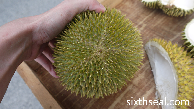 D24 Durian Bottom