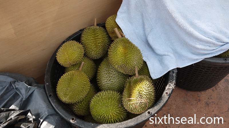 D24 Sultan Durians