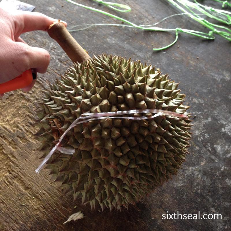Ochee Durian