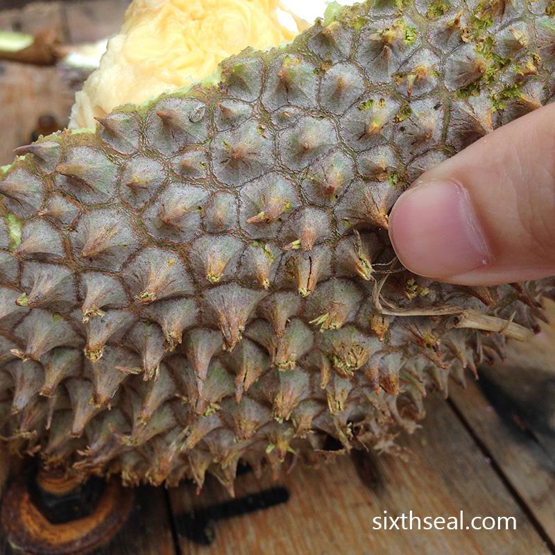 Udang Merah Durian