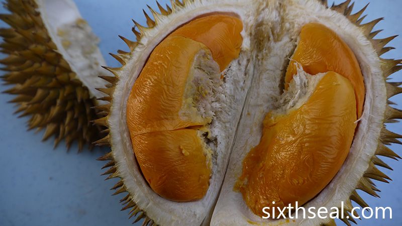 black thorn durian