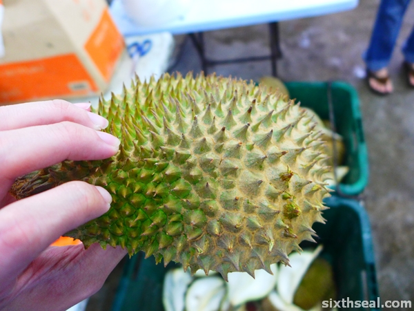durian jantung thorns