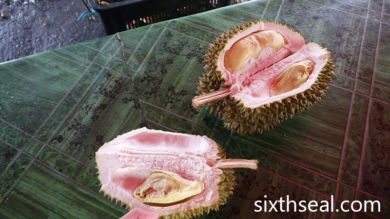 durians xo
