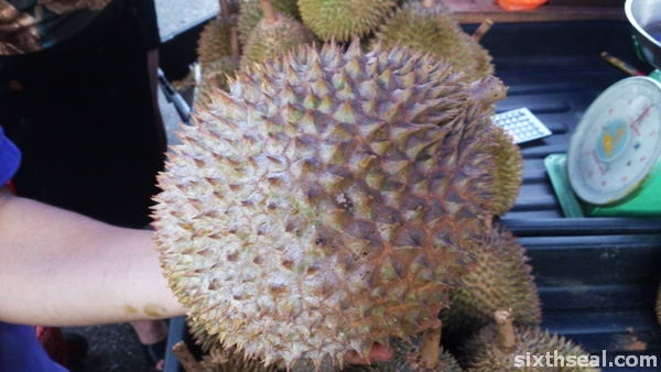 golden swallow durian spikes