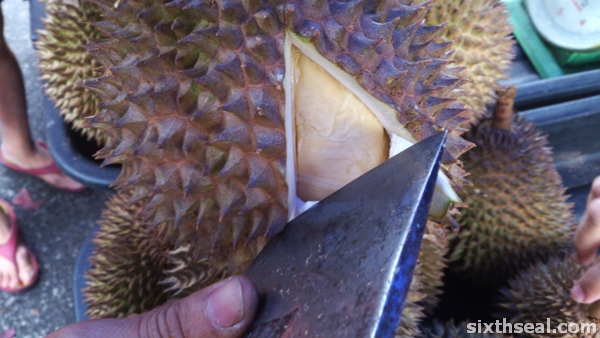 golden swallow durians