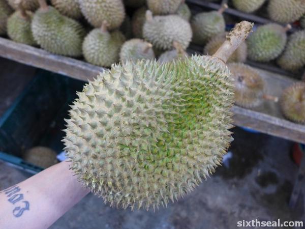 jantung durian