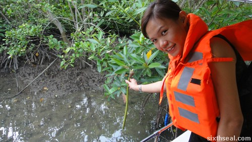 planting mangrove
