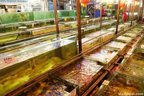 twinsky seafood tanks