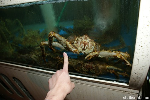 Alaskan King Crab aquarium