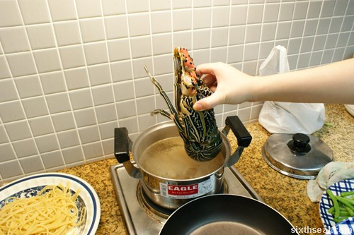 lobster going into pot