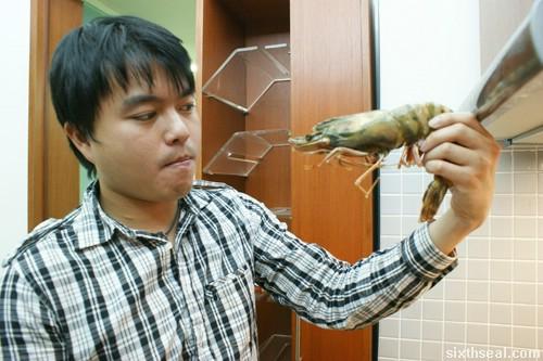 tiger prawn me