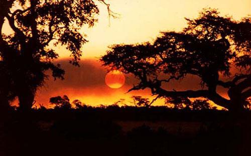 africa-safari