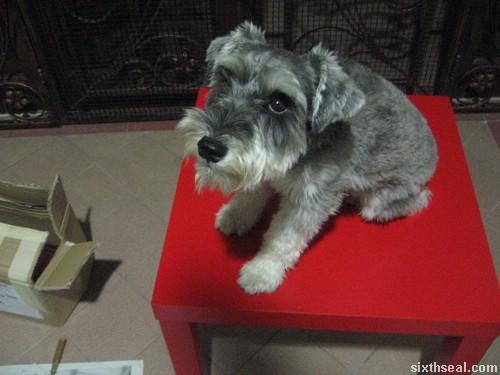 nippon paint dog