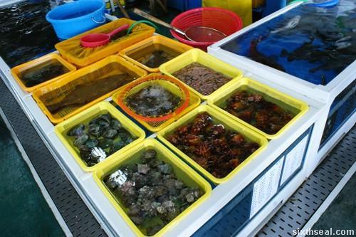 octopus-korea