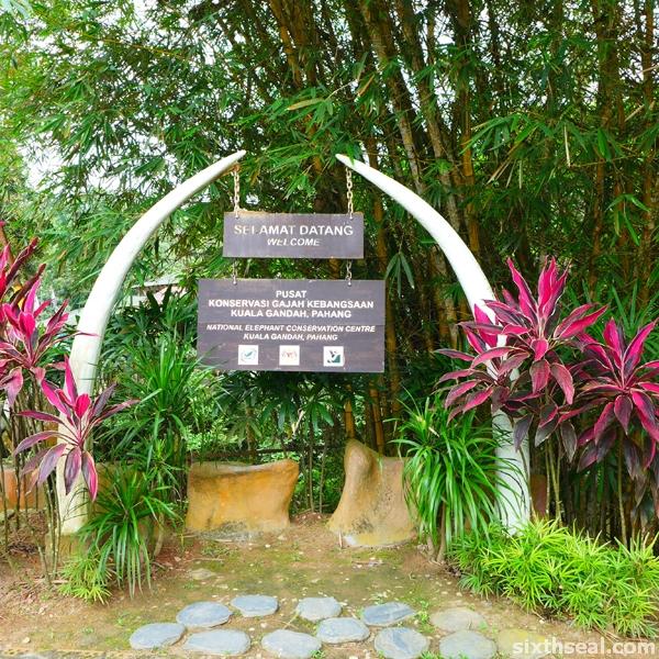 elephant conservation kuala gandah