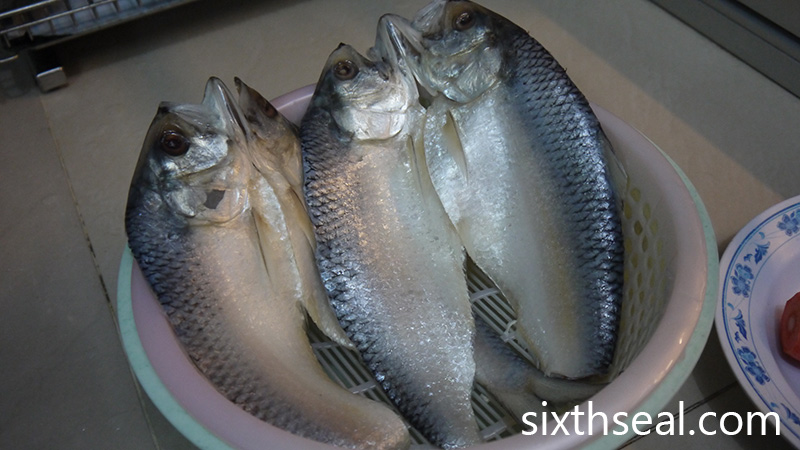 Ikan Terubok