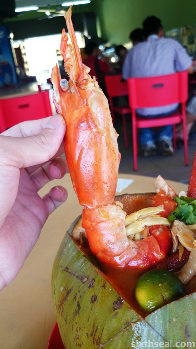 big head prawn